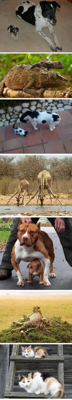 Animals With Their Counterparts...