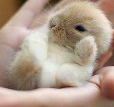 Cute baby bunny!!