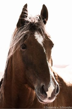 Horse Photography, Horse Portrait, Brown and White, Matted Print and Photo Card, High Key, Wall Decor on Etsy, $42.00