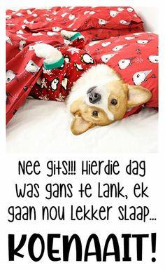 Good Night Sleep Tight, Good Night Blessings, Goeie Nag, Good Night Quotes, Afrikaans, Teddy Bear, Night Night, Animals, Hugs