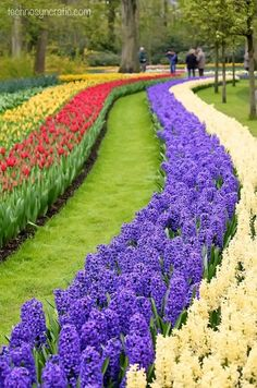 Springtime at the Keukenhof Garden, also known as the Garden of Europe, in The Netherlands.