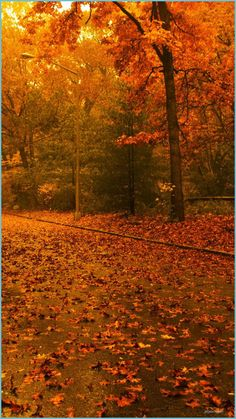 I Will Tell You The Truth About Fall Iphone Wallpaper In The Next 8 Seconds | Fall Iphone Wallpaper