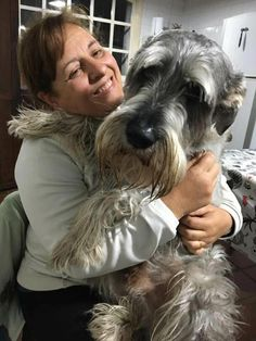 """Outstanding """"schnauzer dogs"""" information is readily available on our website. Ta… - Belezza,animales , salud animal y mas Giant Schnauzer, Schnauzer Puppy, Miniature Schnauzer, Schnauzer Grooming, Animals And Pets, Baby Animals, Cute Animals, Schnauzers, Cute Puppies"""