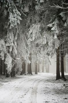Snow Forest, The Netherlands