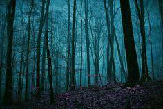 Forest at Night 2 HD Wallpaper Wallpaper