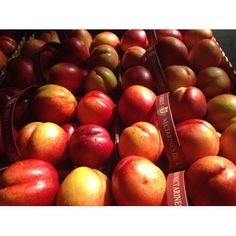 Nectarines Fruit Food image has a public domain license. You can use it for Free and without restrictions even for commercial use Fruit Plants, Fruit Trees, Fruit Recipes, Diet Recipes, Nectarine Fruit, Cherry Tart, In The Flesh, Free Photos, Food Inspiration