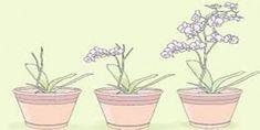 Mini Orkide Bakımı Nasıl Yapılır? Bonsai, Planter Pots, Mandala, Flower Gardening, Mandalas, String Garden