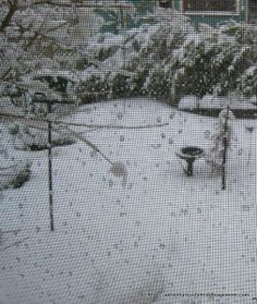 This is how the side yard looks before I shovel my way to the feeder and birdbath.