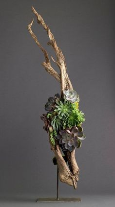 succulents on driftwood arrangement