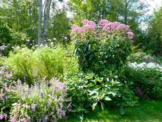 Joe Pye Weed: It's for the birds (and bees, and butterflies) - By Jean English Plants, Garden Landscape Design, Perennial Border, Perennial Garden, Perennials, Flower Garden, Garden Design, Garden Landscaping, Cottage Garden