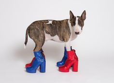 Fashion's Favorite Pets - The New York Times