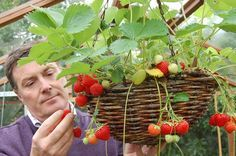 Aquaponics System For You Balcony Garden, Indoor Garden, Garden Plants, Aquaponics System, Organic Gardening, Gardening Tips, Bonsai Styles, Fruit Plants, Hanging Baskets