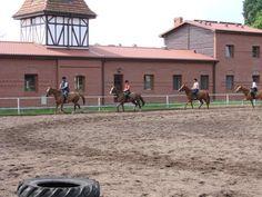 Konie w Nowęcinie