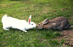 There are many reasons your bunnies may be fighting. A rabbit may fight to show dominance. Paradoxically, rabbits may even fight as part of their bonding process. Bonded rabbits can fight, too. But how much is too much? And how can you get them to stop?