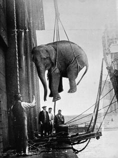 Vintage Circus (1900's)