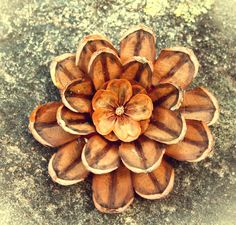 """Made with pieces of pine cones and the tiny """"flower"""" at the heart.  Twig and Toadstool: Pine Cone Flowers"""