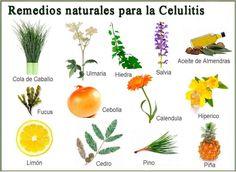 REMEDIOS NATURALES PARA LA CELULITIS. La celulitis aparece cuando las células adipositos que se encargan de almacenar la grasa que demanda nuestro cuerpo ...