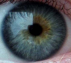 Central Heterochromia on the inside of the Iris and a Limbal Ring on the outside Beautiful Eyes Color, Pretty Eyes, Heterochromia Eyes, Eye Color Chart, Multi Colored Eyes, I Am Blue, Seasonal Color Analysis, Magic Eyes, Gray Eyes