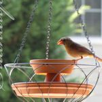 creative bird baths & feeders