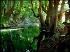 Verde River, Guadalajara, Mexico. What? I never went there!!