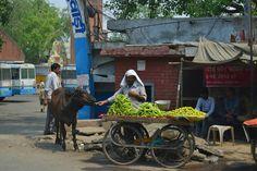 Alimentando a la vaca / Feeding cow India Travel, Cow, Animals, Animais, Animales, Animaux, Animal, Dieren