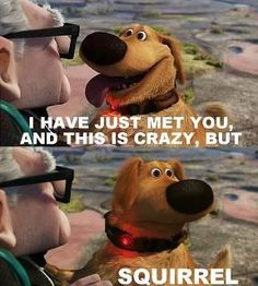 I hae just met you adn this is crazy, but...SQUIRREL!