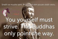 Snažit se musíte sami. Buddhové vám pouze ukáží cestu.