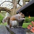 Funny Squirrels - Funny Squirrel Picture 04 (FunnyPica.com)