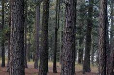 Pine Wood manufacturers in Gandhidham @  http://arunachaltimber.com/