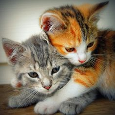 We are kittens but we do not wear the same jumper. Our jumper is how God differentiates us, one from the other.