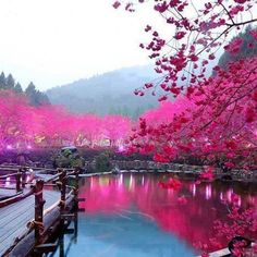 Cherry Blossom Lake In Sakura, japan | Travel World