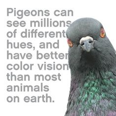 Had no idea that pigeons were so interesting!