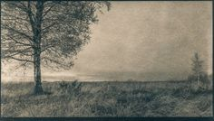 Horizon | tea toned cyanotype on watercolour paper, digital negative | Pirjo Lempeä Cyanotype, Watercolor Paper, Country Roads, Tea, Digital, Teas