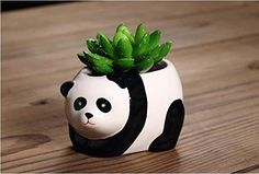 Mini succulus plant in a little ceramic panda pot for $10.99 www.pandathings.com
