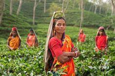 Személy, Nő, India, Mezők, Plantage