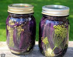 Another great small-batch preserving recipe! When I spotted these gorgeous purple beans at the Ottawa Farmers' Market, I was tempted to buy a whole bushel. I adore beans and their vibrant col… Purple Green Beans Recipe, Green Bean Recipes, Dilly Beans Canning Recipe, Canning Recipes, Preserving Recipe, String Bean Recipes, Nashville Farmers Market, Pickled Green Beans, Recipes