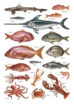 Aegean Fish Illustrations on Behance