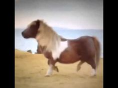 Tip toeing in my Jordan's horse vine// OMG I can't stop laughing this is the best thing ever XD