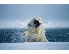 Paul Nicklen Photography - wow