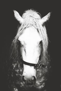 Irish Draught Horse   https://www.etsy.com/hk-en/listing/217402714/black-white-horse-photographyhorse-wall