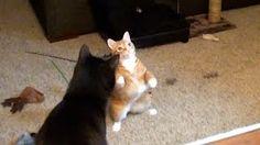 Cole and Marmalade - YouTube