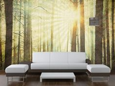 from Zazous - Sunlight In The Forest Wallpaper Mural