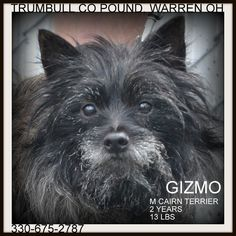http://www.petfinder.com/pet-search?N==0=shelter_name%7C%7Canimal_type%7C%7Cpet_breed_1%7C%7Cpet_breed_2%7C%7Cidentifier=shelter_id%7Crecord_type%7Cstatus=OH650%7Cpet%7CA=0