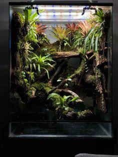 Terrarium with Bromeliads Terrariums Gecko, Chameleon Terrarium, Large Terrarium, Water Terrarium, Terrarium Reptile, Terrarium Plants, Planted Aquarium, Nature Aquarium, Crested Gecko Vivarium