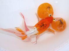 新入荷 : 大森町水族館 Bubble Eye Goldfish, Aquarium Fish, Fish Aquariums, Koi Betta, Beta Fish, Deep Sea Fishing, Beautiful Fish, Carp, Fish Tank