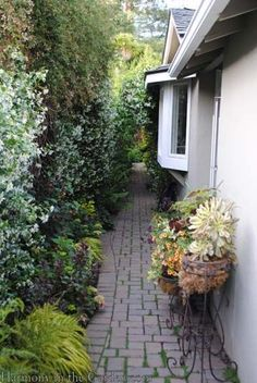 Plants For Narrow Garden Spaces On Pinterest