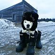 Funny dog: Ready for Winter