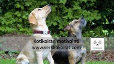 Kotikoiran koulutukset verkossa Dogs, Animals, Animales, Animaux, Pet Dogs, Doggies, Animal, Animais