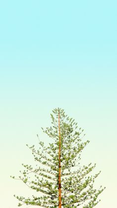 Vertical Wallpaper from pinnedby. Pastel Wallpaper, Screen Wallpaper, Nature Wallpaper, Cool Wallpaper, Mobile Wallpaper, Phone Backgrounds, Wallpaper Backgrounds, Iphone Wallpaper, Minimalist Wallpaper