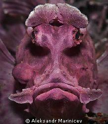 Rhino fish does NOT look happy.